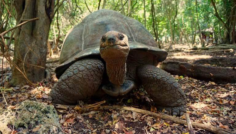Экскурсия Черепахи на Занзибаре