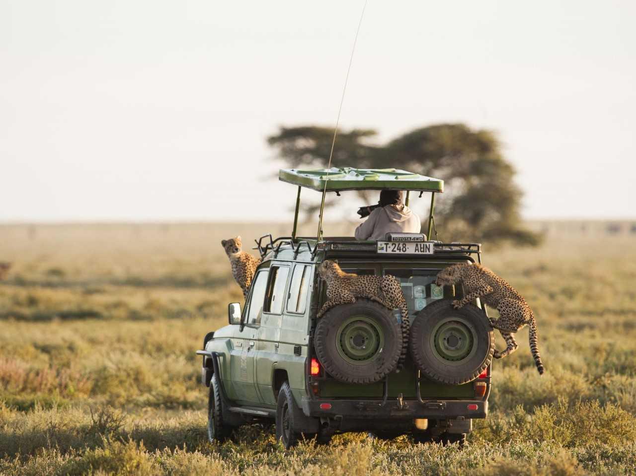 Экскурсии на Занзибаре сафари